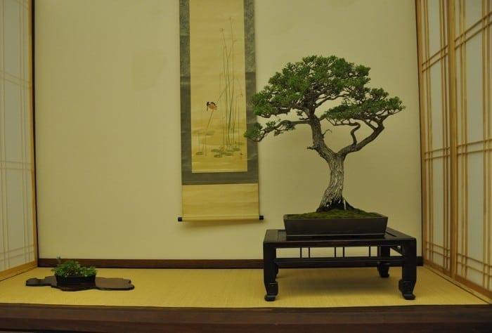 Ceremonia japoneză a ceaiului – între ospitalitate şi meditaţie