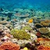mara bariera de corali2 170x170 - Circuit Inspiring Australia – Recomandat de Trip Tailor