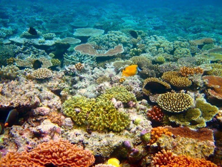 mara bariera de corali
