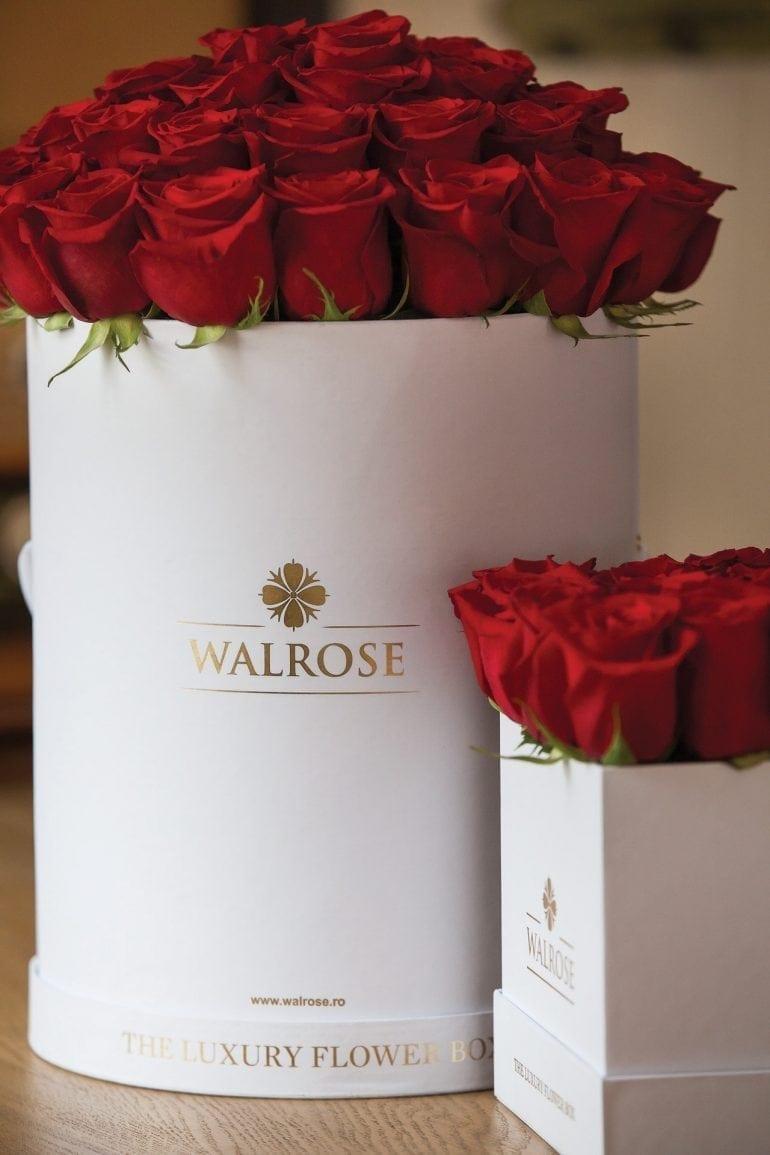 IMG 7143 770x1155 - Walrose - More than flowers… memories