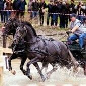 MG 1744 1 170x170 - Karpatia Horse  Show 2016