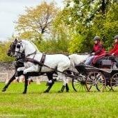 MG 2034 170x170 - Karpatia Horse  Show 2016
