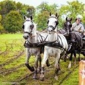 MG 3426 170x170 - Karpatia Horse  Show 2016