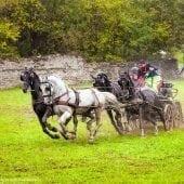 MG 3550 170x170 - Karpatia Horse  Show 2016