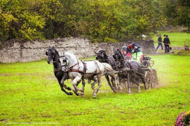 MG 3550 770x513 - Karpatia Horse  Show 2016