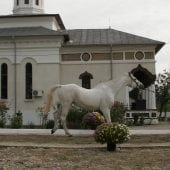 MG 3903 170x170 - Karpatia Horse  Show 2016