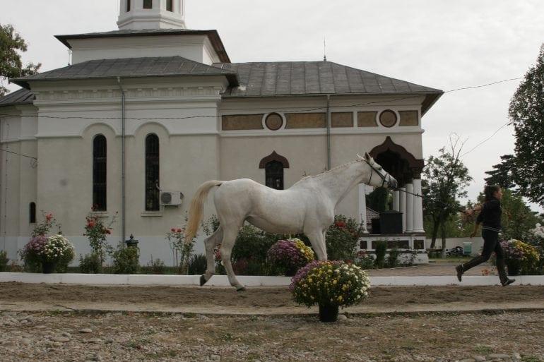 MG 3903 770x513 - Karpatia Horse  Show 2016