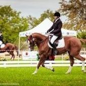 MG 9405 170x170 - Karpatia Horse  Show 2016