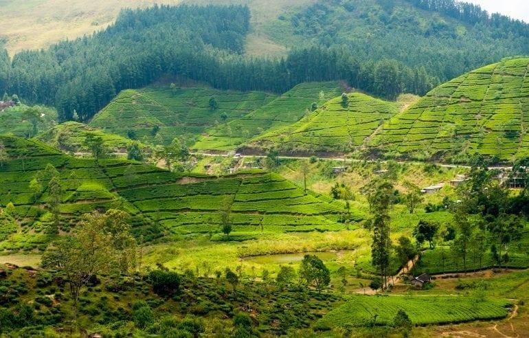 sri lanka 2 site 770x492 - Travel in Style!  Top 5 destinații pentru iubitorii de natură