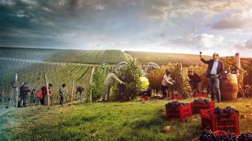 ALIRA: arta vinurilor de poveste