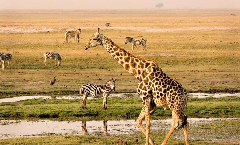 Top 5 destinații de safari