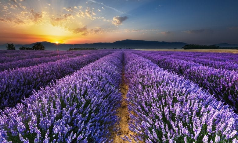 Top 10 Flower Destinations in the World