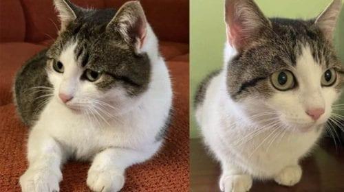 O pisică din Rusia, scoasă la vânzare pentru 320.000 de dolari