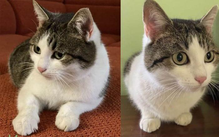 O pisică din Rusia