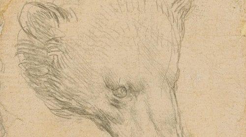 Pictura lui Leonardo da Vinci cu capul unui urs se va vinde la peste 16 milioane de dolari la licitație
